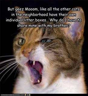 But geez Mooom, like all the other cats in the neighborhood have their own individual litter boxes.  Why do I have to share mine with my brother?