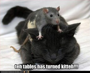 teh tables has turned kitteh!!!