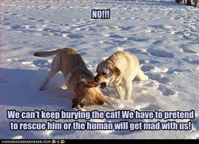 NO!!!          We can't keep burying the cat! We have to pretend to rescue him or the human will get mad with us!