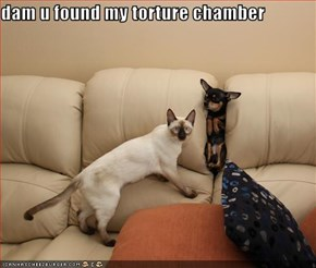 dam u found my torture chamber