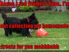 Roses r red Voilets r blue.. I'm  out collecting my homemade :treats for you mahhhahh