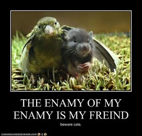 THE ENAMY OF MY ENAMY IS MY FREIND