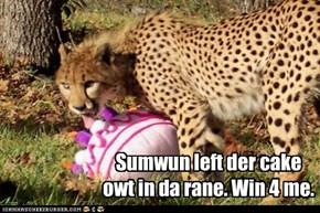 Sumwun left der cake owt in da rane. Win 4 me.