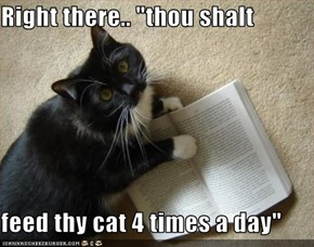 "Right there.. ""thou shalt  feed thy cat 4 times a day"""