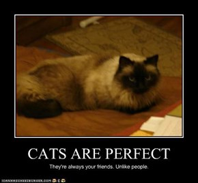 CATS ARE PERFECT