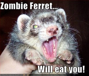 Zombie Ferret...  Will eat you!