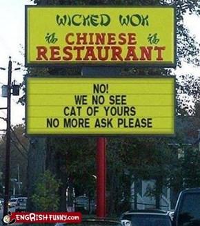 No cat!