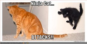 Ninja Cat...  ATTACKS!!