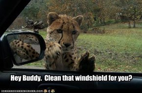Hey Buddy.  Clean that windshield for you?