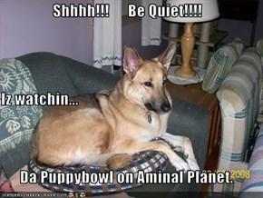 Shhhh!!!      Be Quiet!!!! Iz watchin... Da Puppybowl on Aminal Planet.