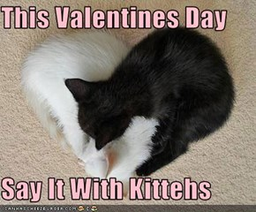 This Valentines Day  Say It With Kittehs