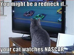 You might be a redneck if...  your cat watches NASCAR