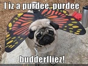 I iz a purdee, purdee  budderfliez!
