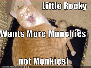 Little Rocky Wants More Munchies not Monkies!