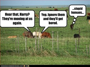 Hear that, Harry? They're mooing at us again.