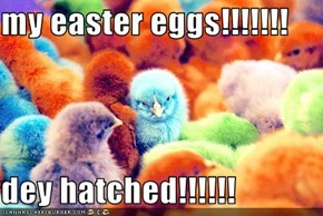 my easter eggs!!!!!!!  dey hatched!!!!!!