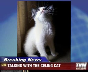 Breaking News - TALKING WITH THE CELING CAT