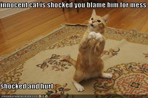innocent cat is shocked you blame him for mess  shocked and hurt