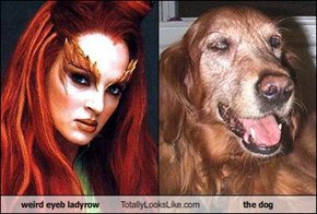 weird eyeb ladyrow Totally Looks Like the dog