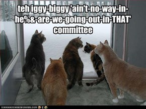 teh iggy-biggy 'ain't-no-way-in-he%&-are-we-going-out-in-THAT' committee