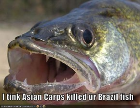 I tink Asian Carps killed ur Brazil fish