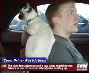 Teen Driver Restrictions - The state legislature passed a law today requiring teen drivers to use LOLcats for safety when backing up.