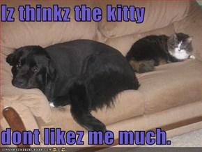 Iz thinkz the kitty   dont likez me much.