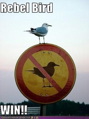 Rebel Bird  WIN!!