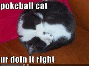pokeball cat  ur doin it right