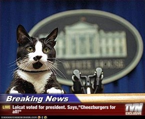 "Breaking News - Lolcat voted for president. Says,""Cheezburgers for all!"""