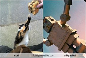 a cat Totally Looks Like a big robot