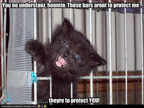 You no understanz, hoomin. These bars arent to protect me .