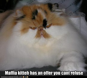 Maffia kitteh has an offer you cant refuse