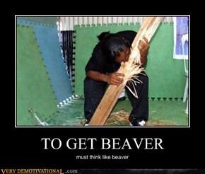 TO GET BEAVER