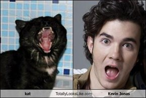 kat Totally Looks Like Kevin Jonas