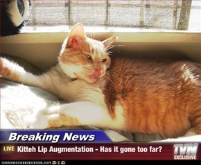 Breaking News - Kitteh Lip Augmentation - Has it gone too far?
