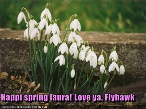 Happi spring laura! Love ya. Flyhawk