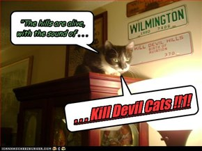 When kittehs read too much Stephen King