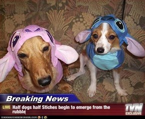Breaking News - Half dogs half Stiches begin to emerge from the rubble