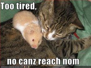 Too tired,  no canz reach nom