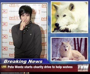 Breaking News - Pete Wentz starts charity drive to help wolves
