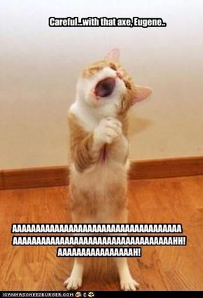 Pink Floyd Cat