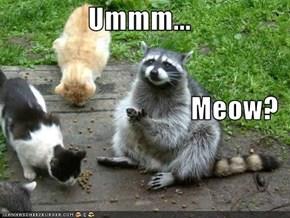 Ummm... Meow?