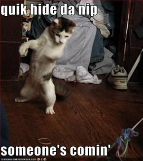 quik hide da nip  someone's comin'