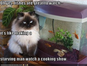 Oh yes, fishes are great to watch--  it's like making a  starving man watch a cooking show.