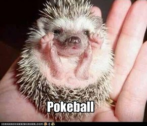 Pokeball Go!!!