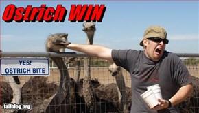 Ostrich WIN
