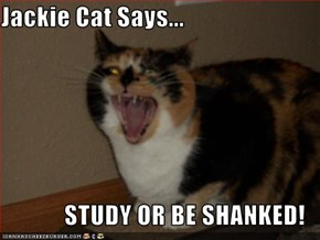 Jackie Cat Says...  STUDY OR BE SHANKED!