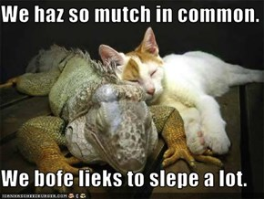 We haz so mutch in common.  We bofe lieks to slepe a lot.