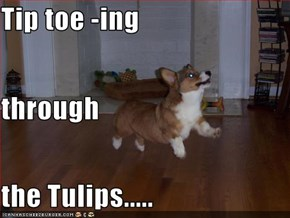 Tip toe -ing through the Tulips.....